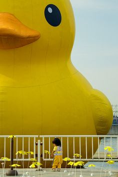 Rubber Duck around the world, Florentijn Hofman 's installation, Hong Kong 2013.